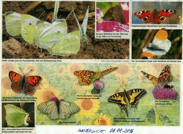 UM-Schmetterlinge_1