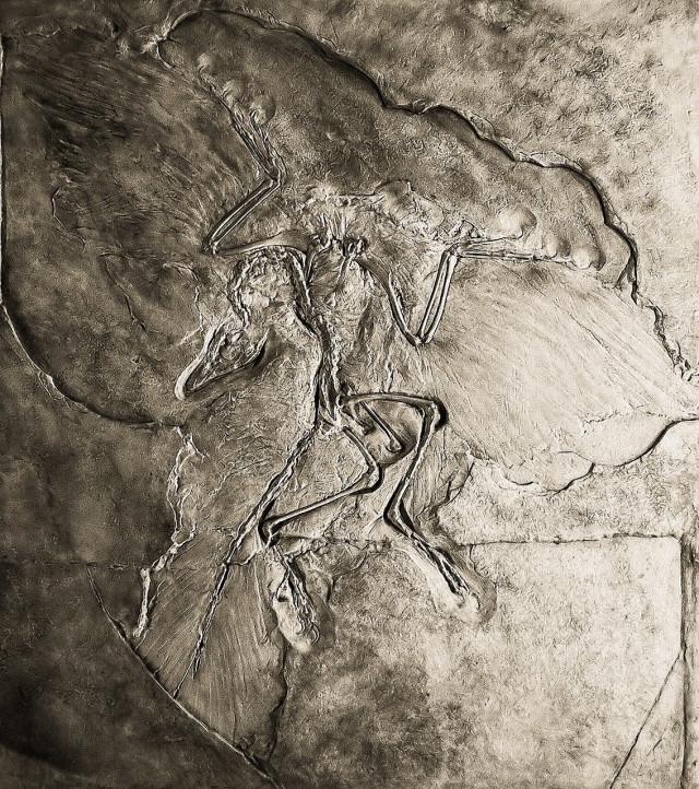 Naturkundemuseum Berlin - Archaeopteryx - Eichstaett
