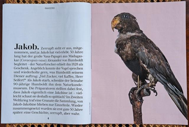 Magazin-Museum-für-Naturkunde-3