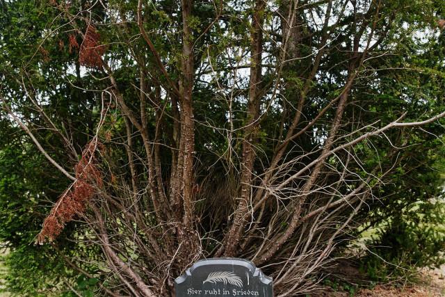 Foto: Jabs (Friedhof Prenzlau)
